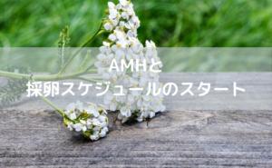 AMHと採卵スケジュール