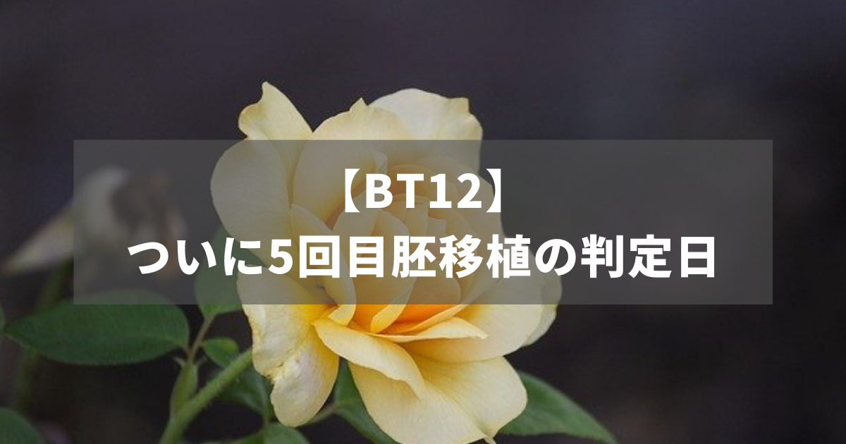 【BT12】ついに5回目胚移植の判定日